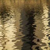 Natury tło złoty wyplata Zdjęcia Stock