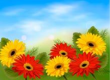 Natury tło z kolorowymi pięknymi kwiatami  Obrazy Stock