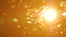 Natury tło z sylwetką ulistnienie zdjęcie wideo