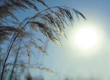 Natury tło z trawy i bokeh światłami zdjęcie stock