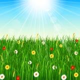 Natury tło z zieloną trawą, niebieskim niebem i jaskrawym słońcem, Zdjęcie Royalty Free
