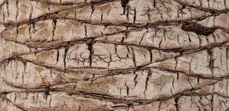 Natury tło barkentyna drzewko palmowe Zdjęcia Stock