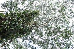Natury tekstury zielony drzewny tło Obrazy Royalty Free