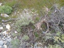 Natury trawy yellowish ziele? obraz royalty free
