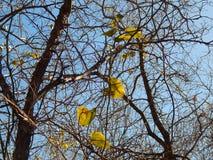 Natury trwają liście Zdjęcie Stock