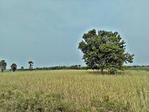 Natury wioska zdjęcia stock