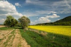 natury wiosna Zdjęcia Stock