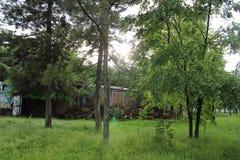 Natury wiosny lata kwiatów zieleni parka zielony rzeczny śliczny ładny drzewo obrazy stock