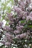 Natury wiosny lata kwiatów zielona rzeczna śliczna ładna zieleń Fotografia Royalty Free