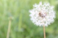 Natury wiosny lata kwiatów zielona rzeczna śliczna ładna zieleń obraz stock