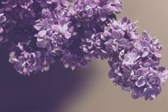 Natury wiosny lata kwiaty fotografia royalty free