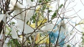 Natury zanieczyszczenie, plastikowi worki na drzewach zdjęcie wideo