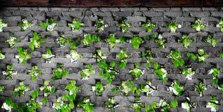 Natury zielona tekstura Obrazy Royalty Free