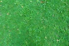 Natury zielonej trawy tła odgórny widok Zdjęcia Royalty Free