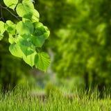 Natury zielony tło 01 Obrazy Royalty Free