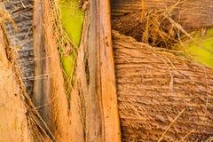 Natutal纹理 真正的纹理 棕榈树纹理 免版税库存图片