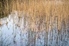 Natuurlijk abstract landschap Stock Foto