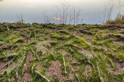 Natuurlijk abstract landschap Royalty-vrije Stock Afbeelding