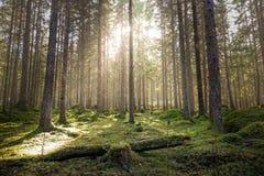 Natuurlijk bemost groen bos royalty-vrije stock afbeelding
