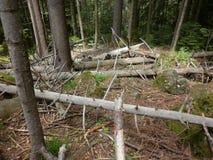 Natuurlijk bos Stock Afbeelding