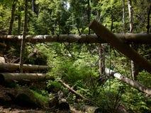 Natuurlijk bos Royalty-vrije Stock Afbeeldingen