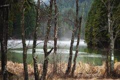 Natuurlijk dammeer in bos, Rood Meer in Roemenië Royalty-vrije Stock Foto
