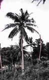 Natuurlijk de palmeneiland Koh Samui Thailand van het levensstijlparadijs Stock Foto's