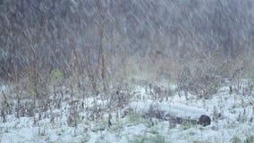 Natuurlijk de winter natuurlijk landschap stock footage