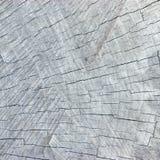Natuurlijk Doorstaan Gebarsten Grey Tree Stump Cut Texture, Grote Gedetailleerde Achtergrond Geweven Patroonclose-up Royalty-vrije Stock Fotografie