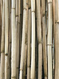 Natuurlijk Droog Bamboe Cane Bamboo Stick Bamboo Pole Royalty-vrije Stock Foto's