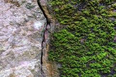 Natuurlijk gebroken steen en mos in bos royalty-vrije stock afbeelding