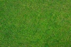 Natuurlijk gras Royalty-vrije Stock Foto's