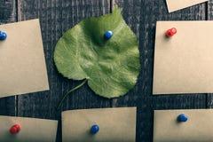 Natuurlijk groen blad onder de stickers Royalty-vrije Stock Fotografie