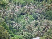 Natuurlijk het eilandlevensstijl van de kokospalmenboom Royalty-vrije Stock Afbeelding