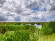 Natuurlijk moerasland stock foto's