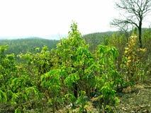 Natuurlijk mooi landschap van rotsachtige berg royalty-vrije stock foto