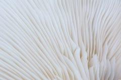 Natuurlijk patroon van oesterpaddestoel, abstract concept als achtergrond Royalty-vrije Stock Afbeeldingen