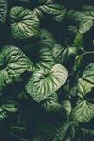 Natuurlijke abstracte bladeren als achtergrond Stock Afbeelding