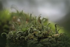 Natuurlijke abstractie Royalty-vrije Stock Foto's