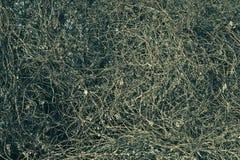 Natuurlijke abstractie Stock Afbeelding