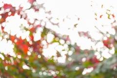 Natuurlijke achtergrond, groen en oranje blad Stock Foto