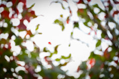 Natuurlijke achtergrond, groen en oranje blad Royalty-vrije Stock Afbeeldingen
