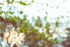 Natuurlijke achtergrond, groen en oranje blad van de herfst Stock Fotografie