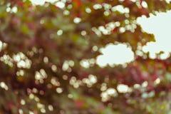 Natuurlijke achtergrond, groen en oranje blad van de herfst Stock Foto's