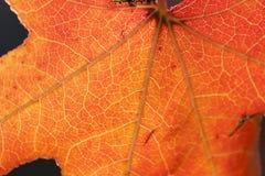 Natuurlijke achtergrond met blad royalty-vrije stock foto's