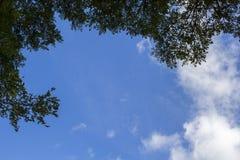 Natuurlijke achtergrond met blauwe hemel en bladeren Het silhouet van de boomtak Stock Foto's
