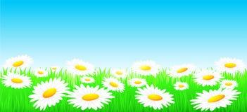 Natuurlijke achtergrond met bloemen en zon Royalty-vrije Stock Foto's
