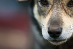 Natuurlijke achtergrond met een grappig portret van een leuk bruin hondverstand stock fotografie