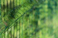 Natuurlijke achtergrond met het ploeteren van installatie Stock Foto