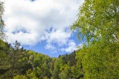 Natuurlijke achtergrond Mooi rond die kader door boomkronen wordt gevormd Royalty-vrije Stock Foto